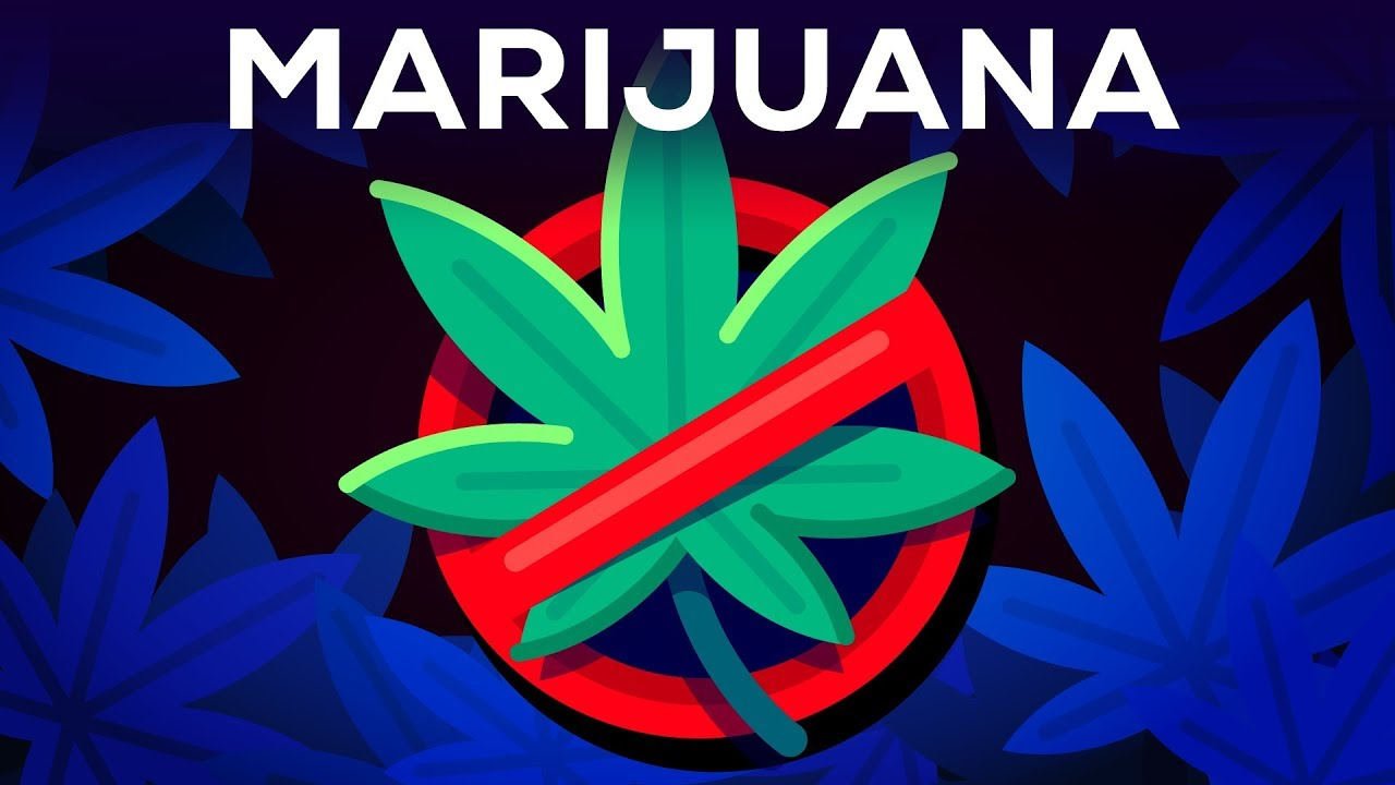 3 Arguments Why Marijuana Should Stay Illegal Reviewed 15