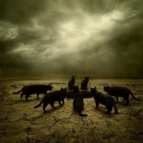 Cats Portents of Doom