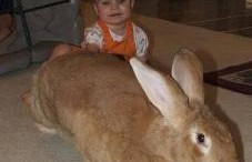 The Bunny Rabbit of Your Nightmares