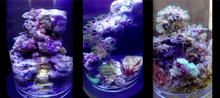 PJ Reef Micro Saltwater Coral Habitat for the Marine Biologist in All of Us