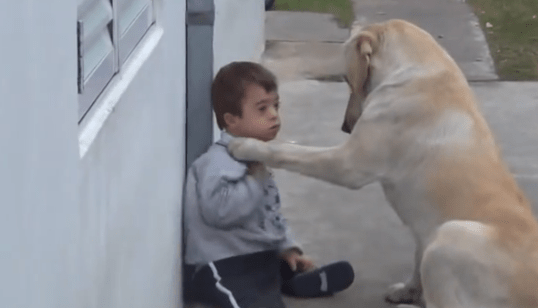 Boy with Down Syndrome + Dog with a World of Patience = A Video to Make Your Heart Melt