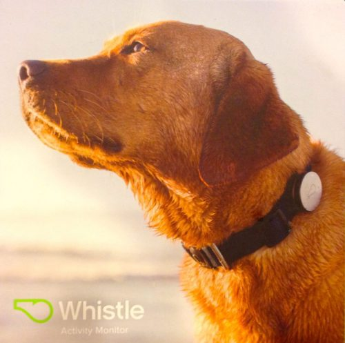 Whistle is Like Fitbit for Dogs