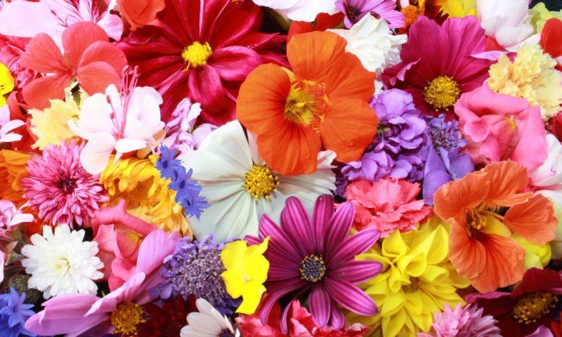 flowers-06