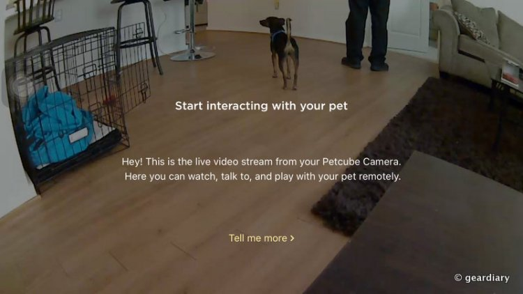 A Human Will Never Be Apart from Their Pet with the Petcube