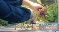 opcom-farms-growbox-and-growwall-4
