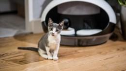 Catspad Smart Pet Feeder Upgrades Your Cat's Pad