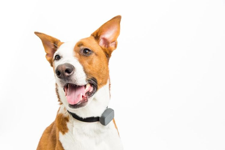 Whistle Announces Their Smartest Pet Tracker Yet