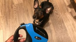 Give Your Puppy Some Extra Lead with the TaoTronic Retractable Dog Leash