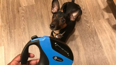 Pet Tech Misc Gear Home Tech