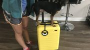 Your Carry-On Luggage Will Stand Out with Away's New Minion Yellow Suitcase
