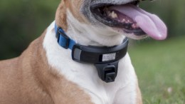 Wagz Will Keep Your Dog Where She Needs to Be Without Shocking or Scaring Her