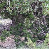 Trees and plants in various shades of green in the bottom of a dry creek on the ranch.