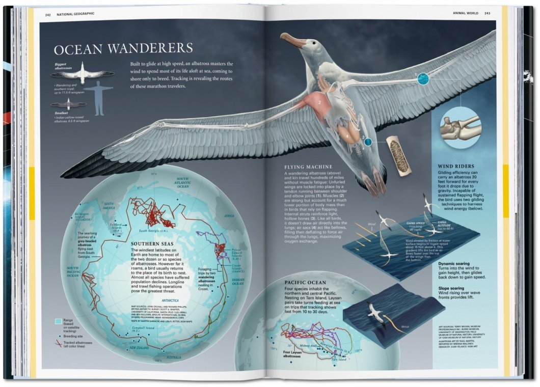 National Geographic 'Infographics' Book – All Things Visual