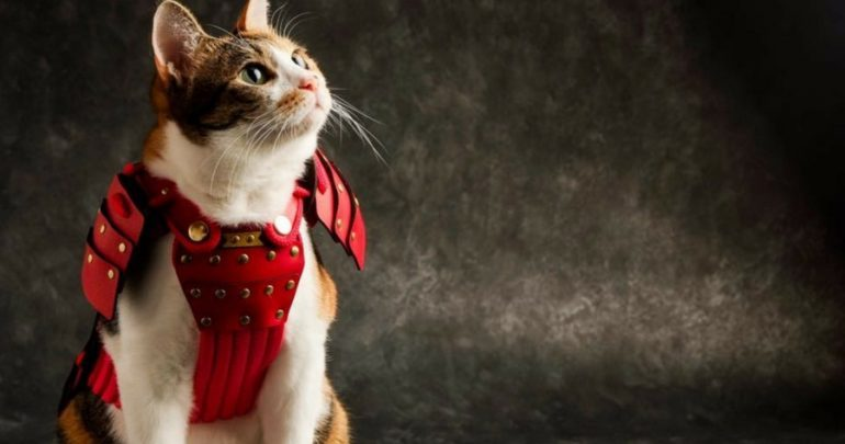 Pet Clothing: Samurai Pet Armor for Cats and Dogs is as Cute as it Gets
