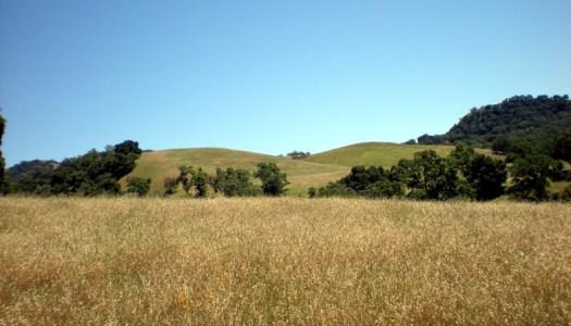 Sunol Wilderness Review
