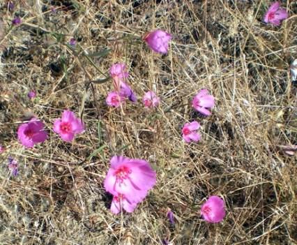 Sibley Wildflowers