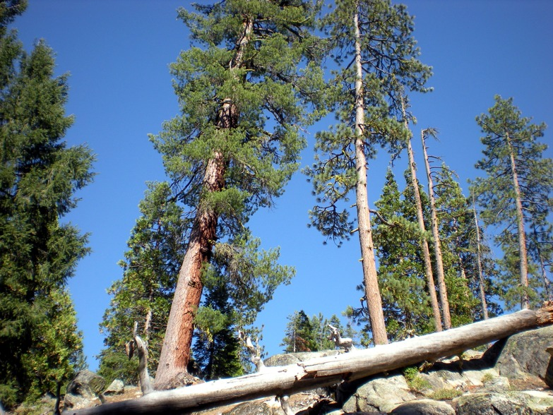 Fallen Log at Capps Crossing