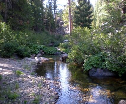 Sierra Small Stream North Fork of Consumnes