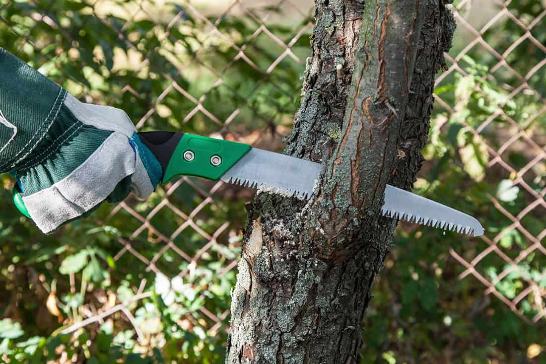 10 Best Pruning Saws (Review) In 2021