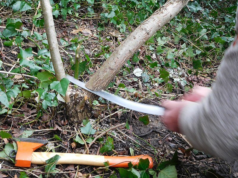How A Pruning Saw Works