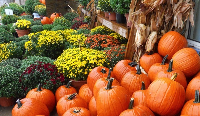 Better Homes And Gardens Fall Desktop Wallpaper How To Keep Your Fall Mums Alive And Blooming Geauga News