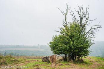 Jägerstand/toter Baum