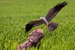 gestión de la biodiversidad