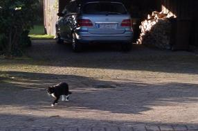 """Niedlich """"Kuh""""-Katze :)"""