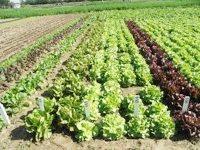 UN PLAN STRATÉGIQUE POUR L'AGRICULTURE BIOLOGIQUE