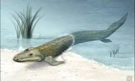 kako-su-izgledale-prve-zivotinje-na-kopnu