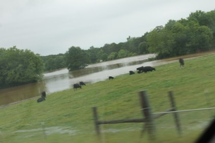 flood 021