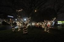 Quintard Median Christmas Lights 2018 (6)