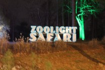 Zoolight Safari 2019 (57)