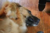 dog 041