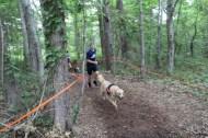 US Canine Biathlon (3)