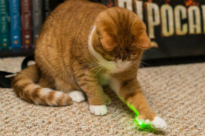 cat-with-green-laser-pointer