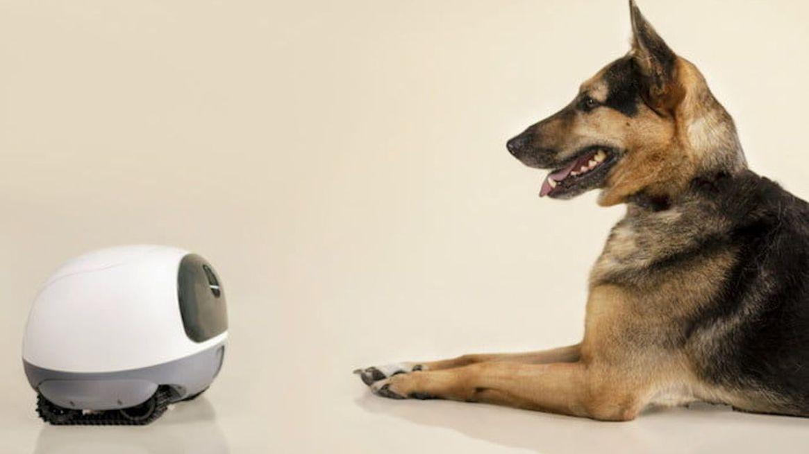 Vava Mobile Pet Cam
