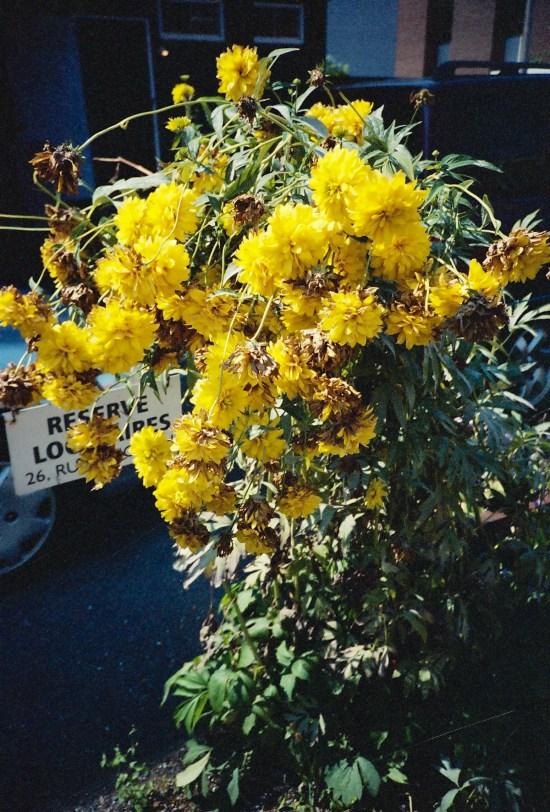 Lomo LC-A - Fleurs à New York