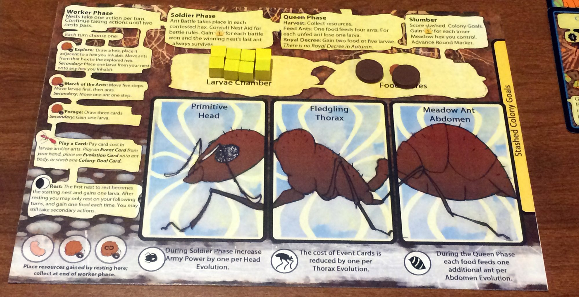 March of the Ants player board