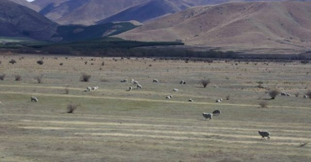 The Sheep of Rohan