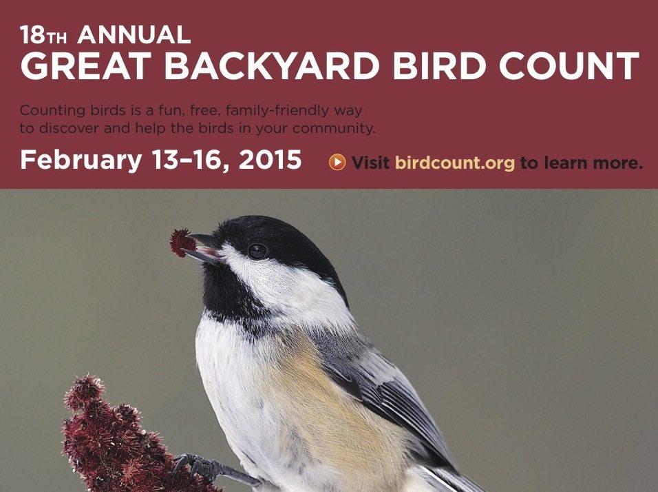 Reading Time 2 Minutes GBBC Brichetto Publicity Poster From Birdcountorg The Great Backyard Bird