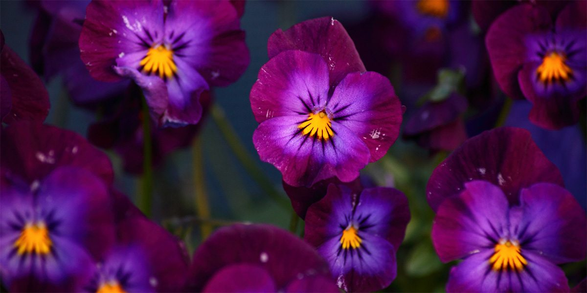 flowers with normal color vision