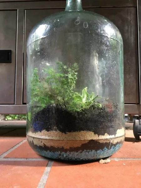 Photo by Evil Genius Mum EG Sinister's Self-Sustaining Terrarium