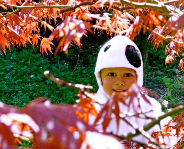 Cutest kodama ever. Photo by Sarah James.