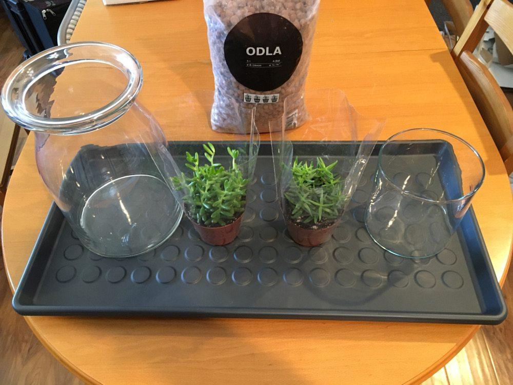 Tiny Plant Journey: A Miniature Garden Newbie