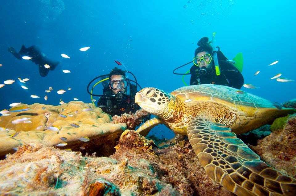 Junior Scuba Diving Pelorus