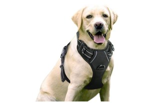Geek Daily Deals 070719 dog harness