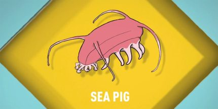 Songs for Unusual Creatures: Sea Pig
