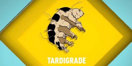 Songs for Unusual Creatures: Tardigrades!