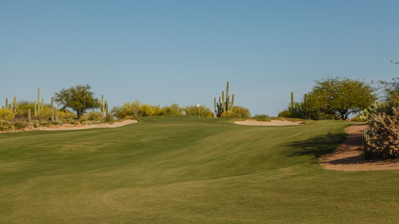 DesertForest1-Approach-DM.jpg